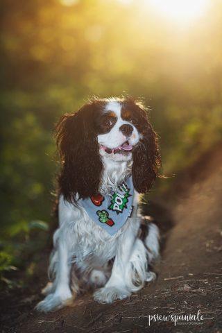 psiewspaniale - blog dla psiarzy i ich pupili