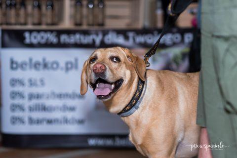 psim targiem we wrocławiu
