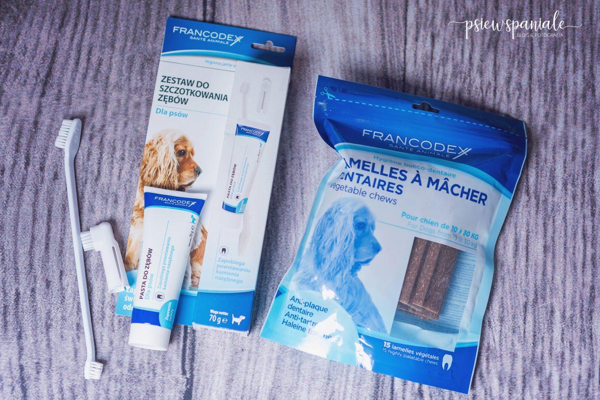 pasta do zębów dla psa