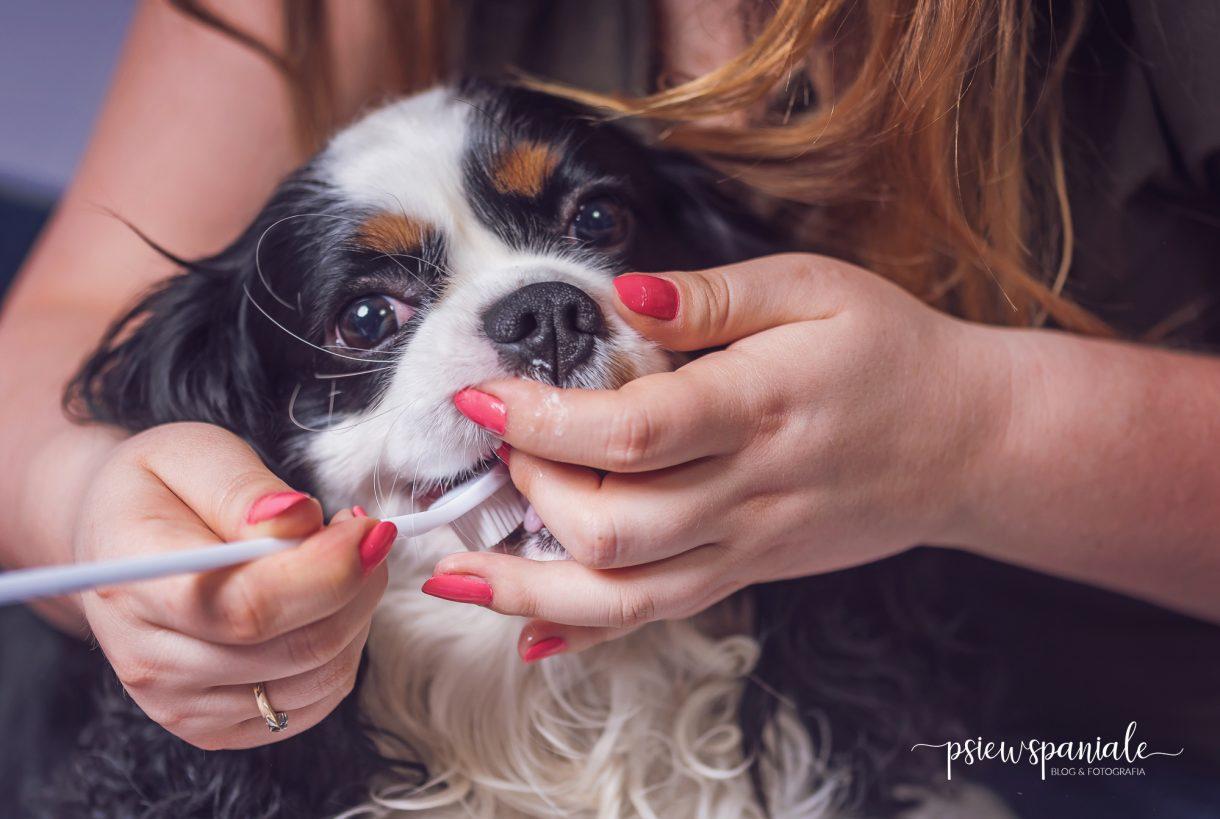 szczotkowanie zębów psa