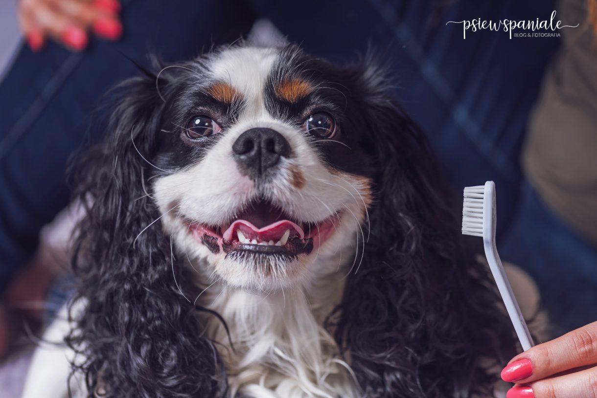 jak dbać o psie zęby