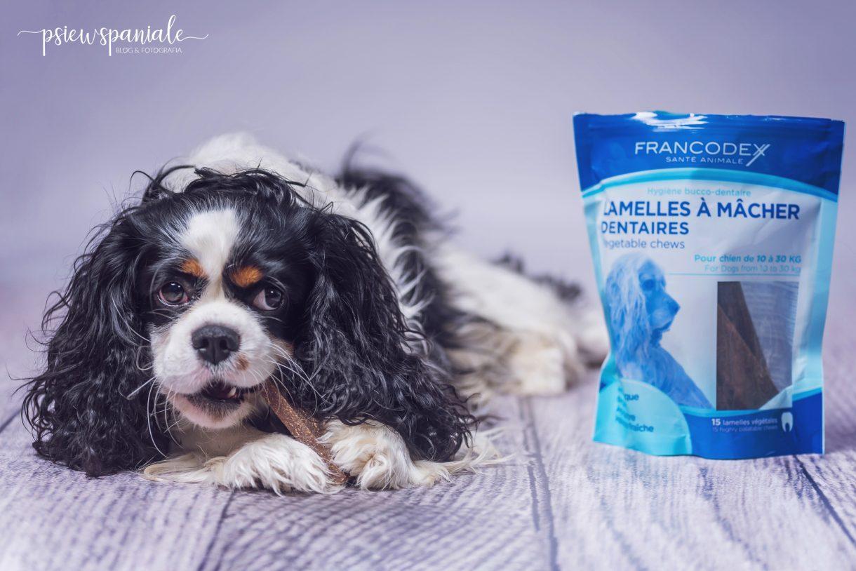 higiena jamy ustnej psa