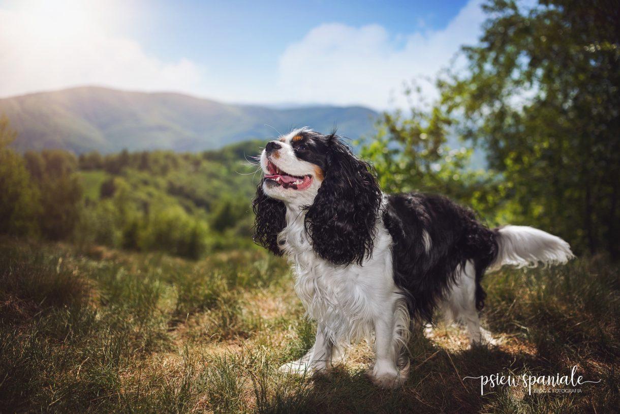 Pies na szlakach Beskidu Śląskiego