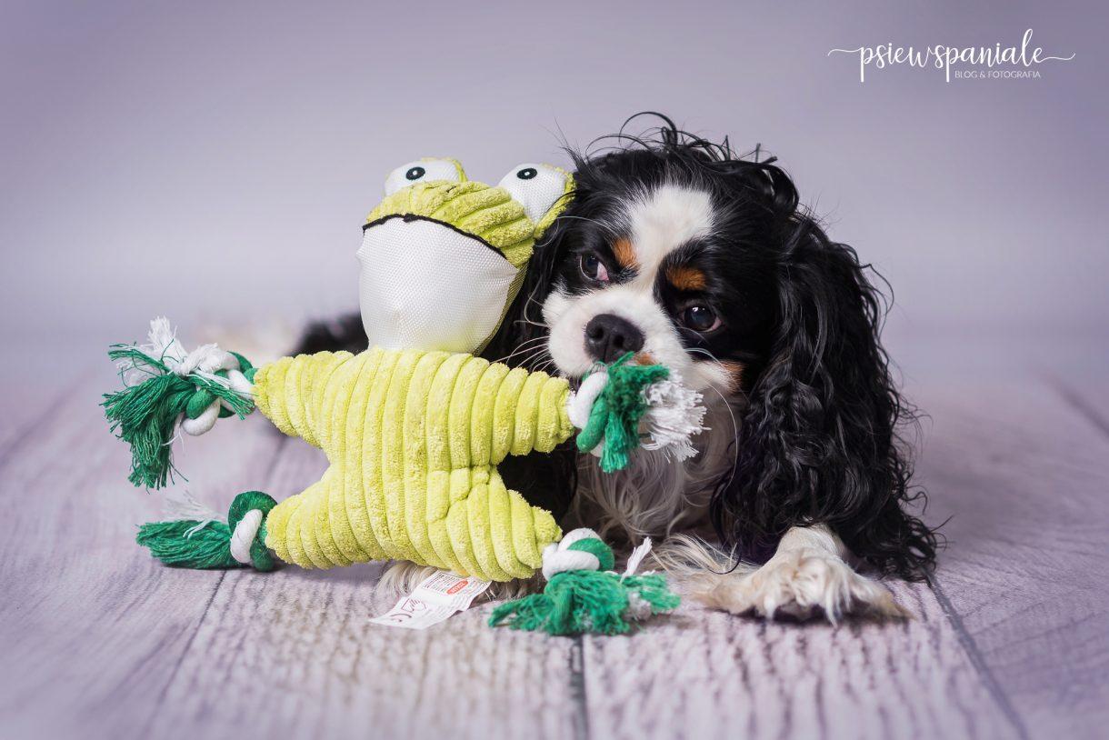 Nikon testuje zabawkę dla psa od Fera.pl