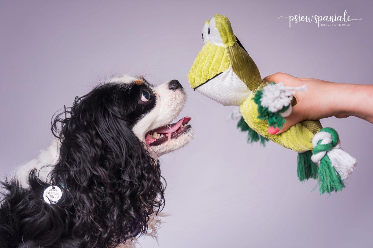 zabawki dla psa Zolux