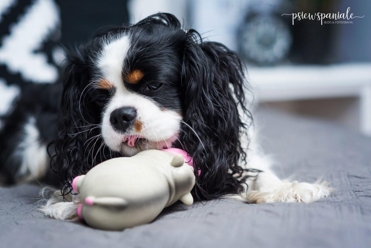 najlepsze zabawki dla psa