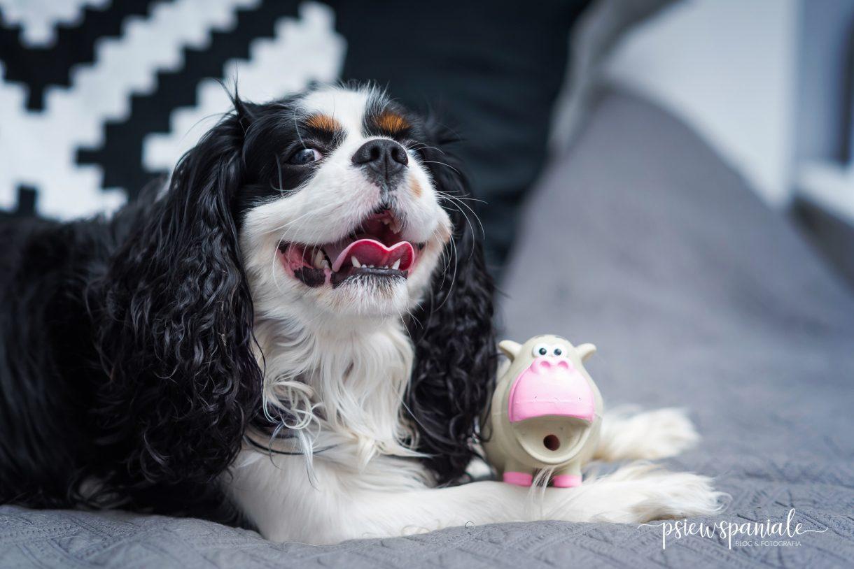 gumowe zabawki dla psa