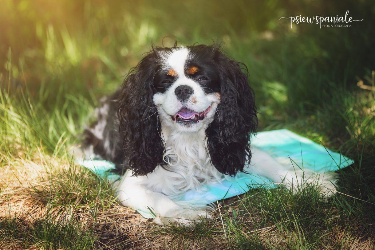 mata chłodząca dla psa