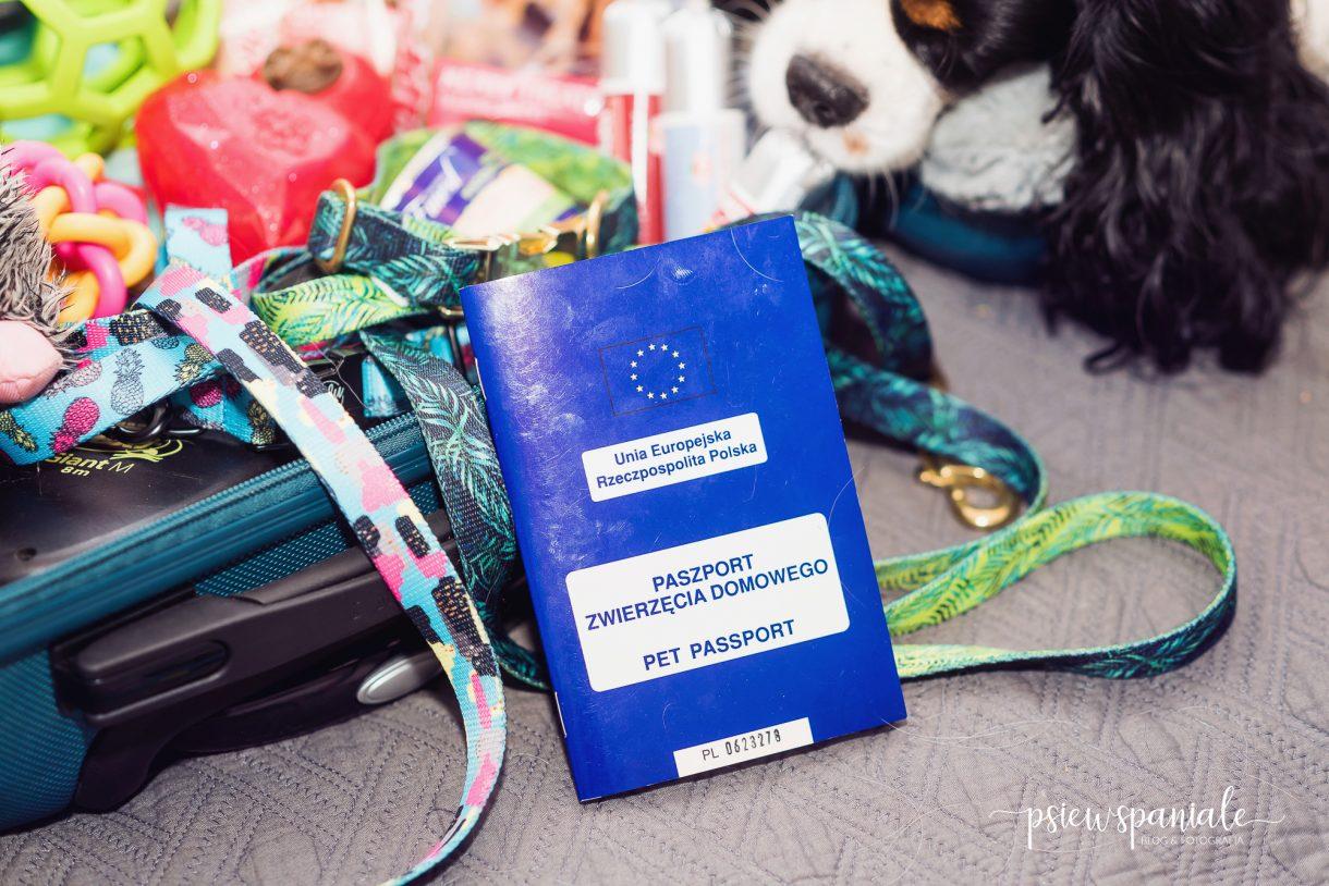 co spakować do walizki na wycieczkę z psem
