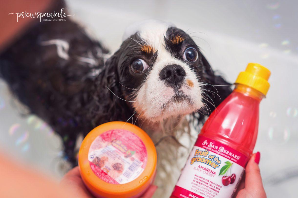 szampon i odżywka dla psa Iv San Bernard