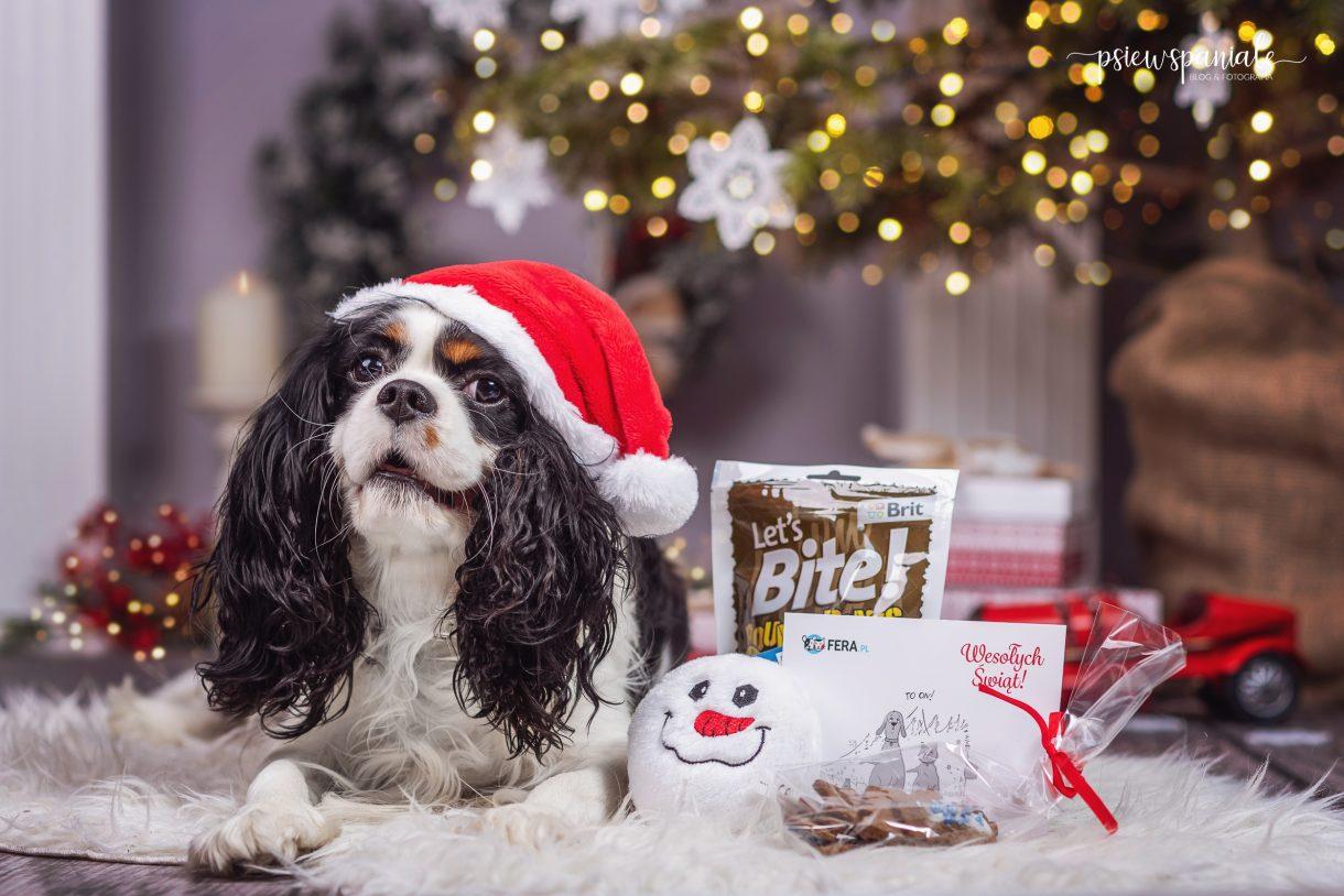 prezent świąteczny dla psa