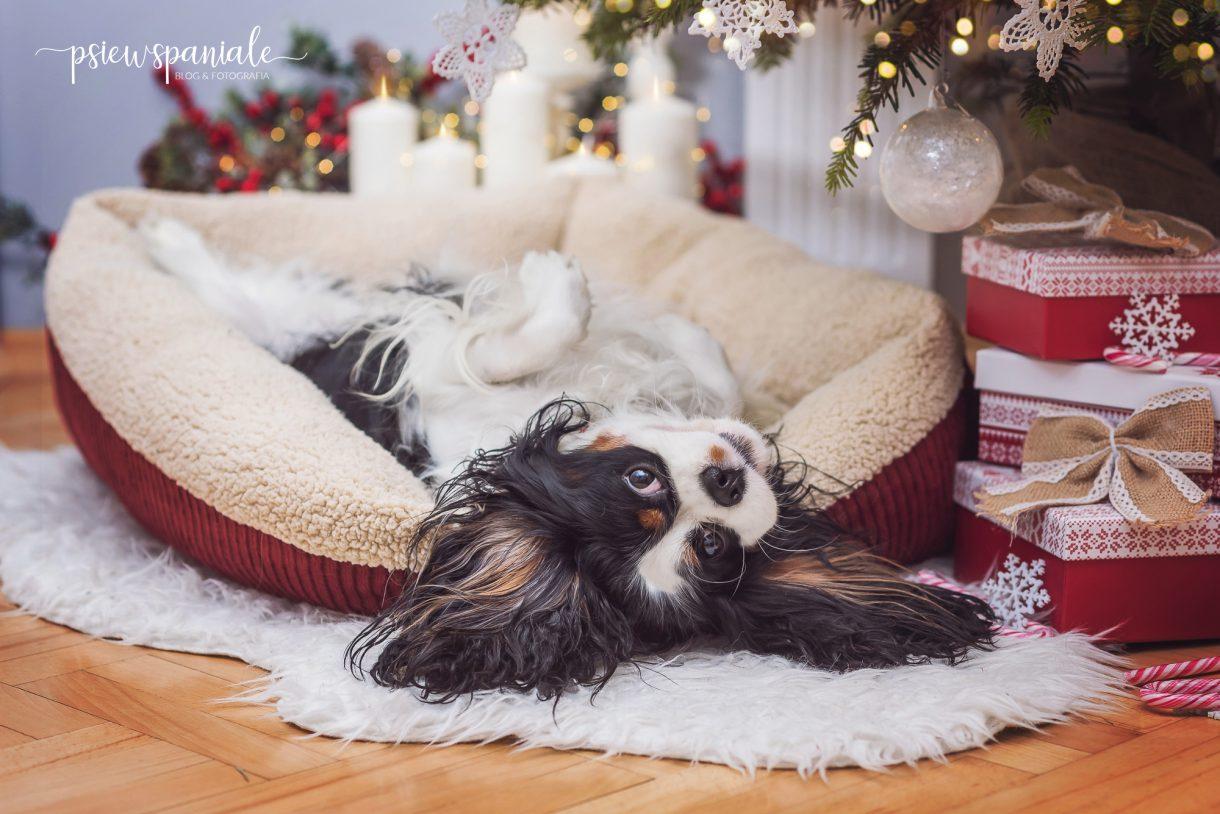 legowisko dla psa Self Warming